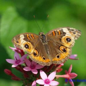 Butterflys and Other Small Wonders
