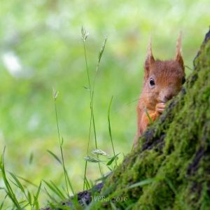 North Wales Wildlife 2016