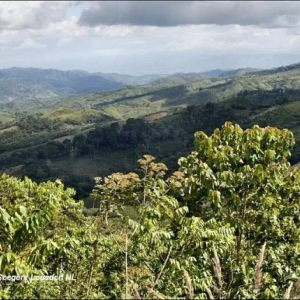 The coffee farmers of Honduras