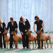 World Dog Show 2009