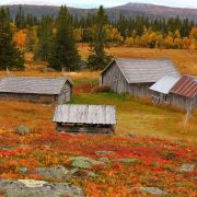 Scandinavian colorful nature