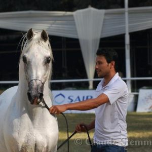 The Egyptian Arabian Horse championship -Zahraa - November 2012